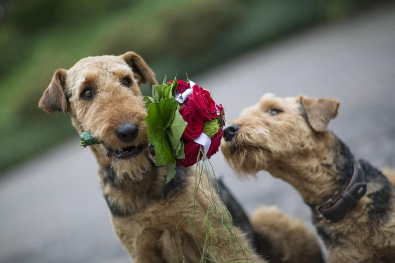 Hochzeitsfotos-Hochzeitsbild-Hochzeit-Hochzeitsfotografie-Hochzeitesfotograf0057