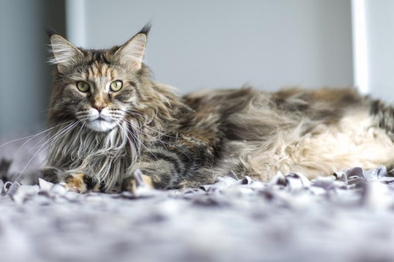 Tierfotos-Katzenfotografie-Pferdefotografie-Hundefotos-Pferdefotos-0003