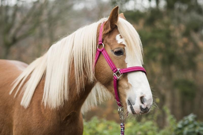 Tierfotos-Katzenfotografie-Pferdefotografie-Hundefotos-Pferdefotos-0005