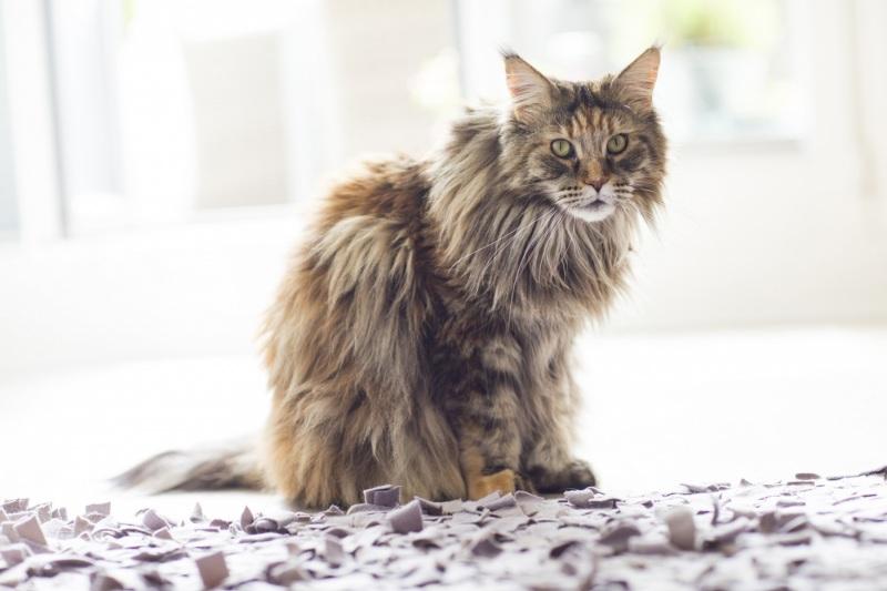 Tierfotos-Katzenfotografie-Pferdefotografie-Hundefotos-Pferdefotos-0007