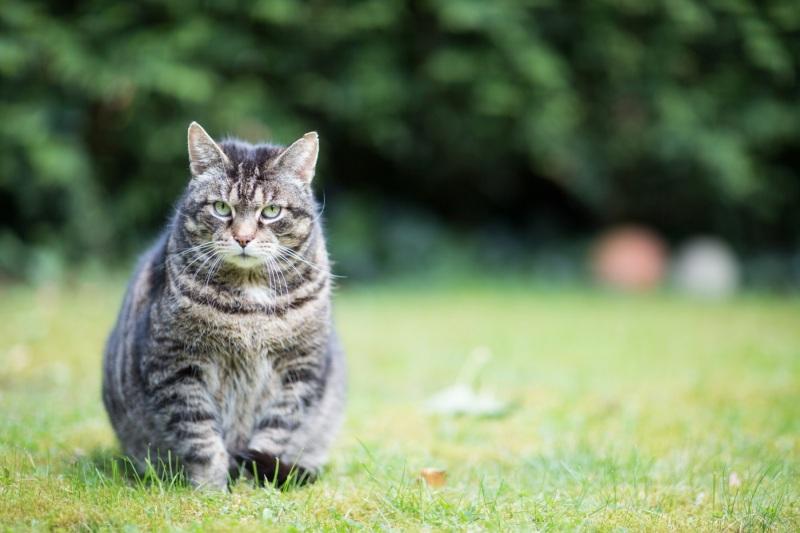 Tierfotos-Katzenfotografie-Pferdefotografie-Hundefotos-Pferdefotos-0023