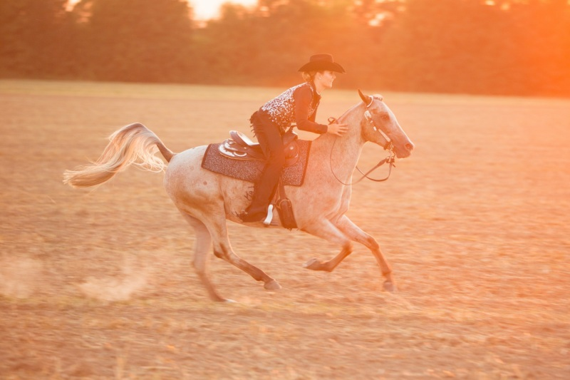 Tierfotos-Katzenfotografie-Pferdefotografie-Hundefotos-Pferdefotos-0028