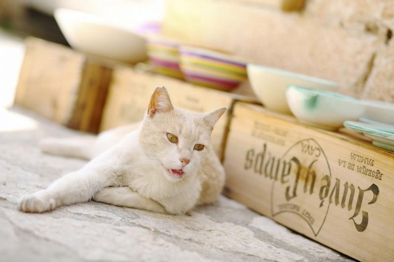 Tierfotos-Katzenfotografie-Pferdefotografie-Hundefotos-Pferdefotos-0035
