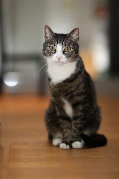Tierfotos-Katzenfotografie-Pferdefotografie-Hundefotos-Pferdefotos-0042