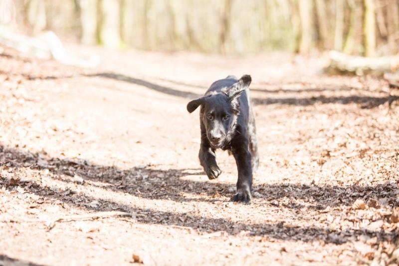 Tierfotos-Katzenfotografie-Pferdefotografie-Hundefotos-Pferdefotos-0047
